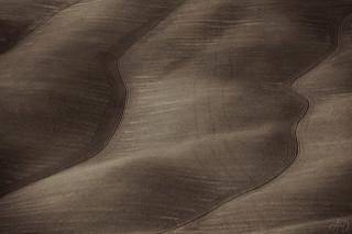 Terra di Siena (32865)