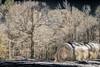 _DSC0060 (dixiedog) Tags: fall landscape mississippi snow