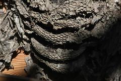 CKuchem-6912 (christine_kuchem) Tags: bau frühjahr frühling garten gebilde höhle kiste nest nestbau nutzgarten wabe wespe wespennest alt leer zerstört verlassen