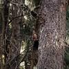 DSC07816 (2) (kriD1973) Tags: europa europe italia italien italy italie alpi alpen alps alpes montagna berge montagne mountains trentino gebirge berglandschaften squirrel eichhörnchen scoiattolo écureuil valdinon