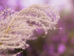 Nature. (ost_jean) Tags: bokeh colors plants nature nikon d5200 tamron sp 90mm f28 di vc ostjean autumn herfst