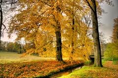 Düsseldorf - Angermund - Otoño (Ventura Carmona) Tags: alemania germany deutschland nrw düsseldorf angermund wald bosque forest otoño herbst autumn venturacarmona