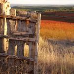 Autumn colours thumbnail