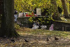 Bruges. (ost_jean) Tags: brugge bruges nature ostjean nikon d5200 tamron sp 90mm f28 di vc usd macro 11 f004n swans
