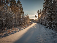 20171119003923 (koppomcolors) Tags: koppomcolors skog forest snö snow sweden sverige scandinavia värmland varmland winter vinter