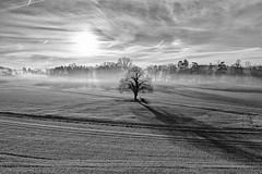 googlepixel2 pixel pixel2 sun sunlight landscape baum... (Photo: Andreas Voegele on Flickr)
