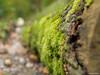 Moss (✦ Erdinc Ulas Photography ✦) Tags: lenstagger bos amsterdam netherlands forest nederland holland green groen tree hexanon konica dutch autumn wood bokeh amsterdamse focus boom mos moss