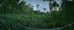 Colombia177 copy (McGography) Tags: colombia film amazon jungle kodak fuji nate nathan mcgarigal leticia san martin puerto narino