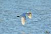A-LUR_2088 (OrNeSsInA) Tags: trasimeno uccelli bird natura italia umbria castiglionedellago ornessina lucarosi nikon tamron byrd lago chiusi siena perugia aironi cormorani