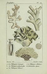 n60_w1150 (BioDivLibrary) Tags: annelida atlases cnidaria echinodermata eels helminths worms universitylibraryuniversityofillinoisurbanachampaign bhl:page=54348102 dc:identifier=httpsbiodiversitylibraryorgpage54348102