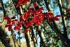 Colores de otoño · Autumn colors (Ana López Heredia) Tags: analópezheredia canoneos600d canon eos 600d tamron18270mmf3563diiivcpzd tamron puigcerdá puigcerdà lacerdanya cerdaña girona gerona cataluña catalunya hojas leaves otoño autumn bokeh desenfoque