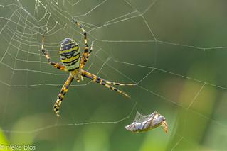 Spiderweb-5