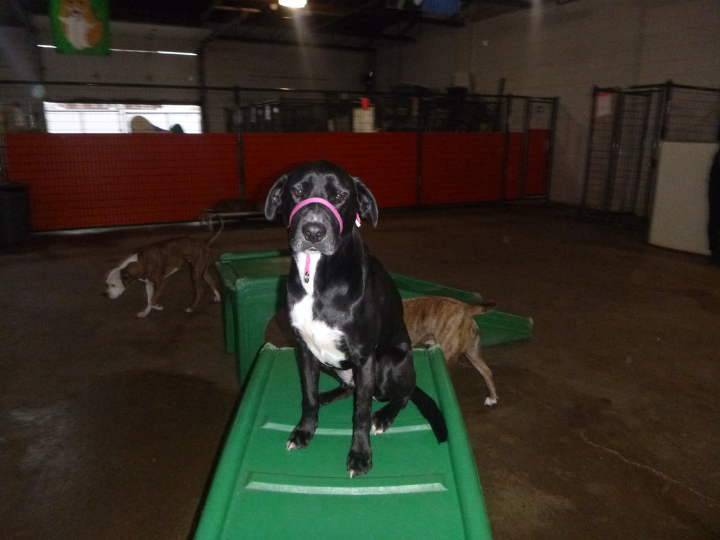 Canine To Five Dog Daycare And Dog Boarding