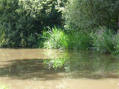 Peace (Lexie's Mum) Tags: continuing30dayswild walking walks walkingthedog nature wildlife scenery floraandfauna canal water sunlit