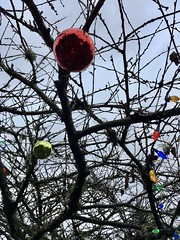 333/365: Branches and Baubles