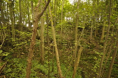 _DSC1884 (petelovespurple) Tags: ryedale northyorkshire appleton spaunton