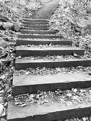 an afternoon in the country 🍂 (anokarina) Tags: harpersferry westvirginia wv appleiphone8 country autumn blueridgemountains appalachiantrail shenandoahrivervalley river mountains trees woods fall outdoor outside steps stairs stairway staircase stone grey grayscale bw blackwhite monochrome jefferson nationalparkservice nps nationalpark