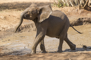 Unique Partnership to Save Baby Elephants