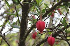 IMG_3236 (avsfan1321) Tags: kylemoreabbey ireland countygalway connemara garden flower flowers