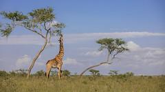 Nairobi-Nationalpark-8047 (ovg2012) Tags: kenia kenya nairobi nairobinationalpark