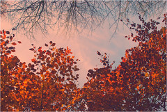 DSC_1864 (FMAG) Tags: 2017 żabieniec zalesie jesien autumn leaves flora 7dwf