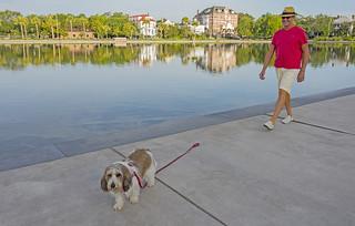 Dog Walking in Charleston By Ellen Clark