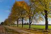 Herbstfarben (annareinert) Tags: baum bã¤ume baeume baumreihe weg baumallee jahreszeit herbst herbstfã¤rbung herbstfaerbung herbstfarben bunt farbenfroh verfã¤rbung verfaerbung natur landschaft mã¼nsterland muensterland nordrheinwestfalen deutschland bäume herbstfärbung verfärbung münsterland