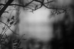sunset, garden of memories (revisited) (Neko! Neko! Neko!) Tags: blackandwhite blackwhite bw mono monochrome emotion feeling dream memories time subconsciousness expression expressionism surreal surrealism