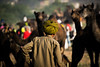 Pushkar Mela 2017 (MajidZz) Tags: travel travelingtheworld travelphotography photography travels traveltheworld india incredibleindia indiapictures indiaphotoproject nikon nikonindia nikonasia man camel herd fest pushkar pushkarmela mela 2017 greatshot travelawesome awesome agameoftones photooftheday picture