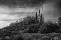 The Long Farewell (Josh Patterson Photo) Tags: anf angelesnationalforest landscape nature landscapes california californiacrest pacificcresttrail socal southerncalifornia losangeles nationalforest blackandwhite monochrome clouds cloudscape