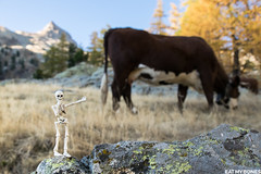 Autumn hike in the Mercantour, France (EatMyBones) Tags: miniature poseskeleton rement skeleton toy toyphotography figurine