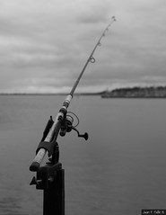"""""""Many men go fishing all of their lives without knowing that it is not fish they are after."""" -Henry David Thoreau (JF.Paillié) Tags: geelong victoria australia au urbanphotography canonphotography sigmamoments geelonglife perspective bnwlife streetsvision citylife streetphoto streetphotographer urbanandstreet everybodystreet cityliving motivation canonaustralia canonphotos sigma justgoshoot bnwdrama blackandwhitephotography bnwcaptures"""