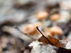 Com m'agrada la tardor - 1 (jocsdellum) Tags: tardor otoñoautumn fall hojas fulles leaves bolets setas mushrooms desenfocament desenfoque blur