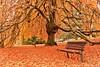 Barbieux ( Nord France ) (Méziane R. Photography) Tags: couleur automne photo soleil romance mezianerahem nordfrance tree bench