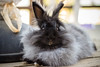 gasparina modelo (matíasganaperagallo) Tags: bunny conejo