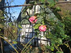 last-rose (Frizztext) Tags: rose framework farm germany bergerhof architecture fachwerkhaus northrhine westphalia northrhinewestphalia