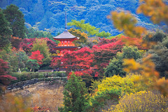 Kiyomizu-dera in autumn season,The leave change color of red castle in japan (Patrick Foto ;)) Tags: ancient architecture art asia autumn background bamboo beach beautiful beauty bridal buddha buddhism buddhist building castle cherry culture daigoji day dish dress east famous fodder garden gate japan japanese kyoto landmark landscape leaf leaves maple national nature pagoda pattern place red religion sakura shrine temple tokyo tourism travel twentysomething zen kyōtoshi kyōtofu jp