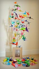 100 Peace Cranes (Squatbetty) Tags: walterbingham ww1 origami peacecranes symbolofpeace tree peacecranetreeforwalter 100cranes 100yearsago acraneforeveryyear century remembered