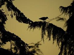 gull on a limb (observe:photo doc:learn = fun :)) Tags: gull limb