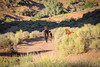 Wild horse & foal (gorbould) Tags: 2017 monumentvalley navajotribalpark usa utah america butte buttes horse horses southwest wildhorses