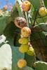 DSC_0102 (MoJo0103) Tags: italien italy italia puglia apulien gargano peschici