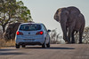Back up! (NettyA) Tags: 2017 africa africanelephant krugernationalpark loxodonta southafrica animal car elephants road safari travel wildlife