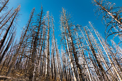 P1030917.jpg (beattieboy) Tags: lincolnnationalforest forestfire