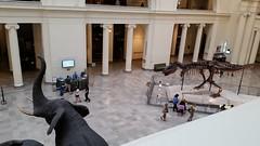 FieldMuseum (lorablong) Tags: fieldmuseum chicago illinois museum