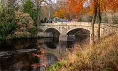 Larkhall River Avon Autumn (grahamwilliamson1985) Tags: grahamwilliamson autumn river avon trees goldenleaves longexposure sonya7r sony zeiss