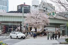 DSC_3514 (維尼賈許) Tags: 2017tokyotrip d610 day7 japan nikon24120mmf4ged 日本 日本橋 chūōku tōkyōto jp