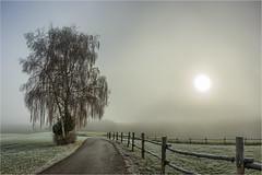 November (Robbi Metz) Tags: deutschland germany bayern bavaria stauden augsburgwestlichewälder november landscape sunrise fog tree sky canoneos