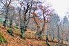 La macinatura della castagna (Image Comunicazione) Tags: castagna macinatura montagna farina
