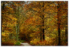 Wanderweg (frodul) Tags: baum landschaft natur wald baumstamm herbst blattfärbung gelb grün jahreszeit blatt blätter deister laub wanderweg weg erholung egestorf niedersachsen deutschland autumn tree wood nature
