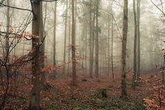 Carpet (Netsrak) Tags: eu europa europe forst natur nebel wald fog forest mist nature woods